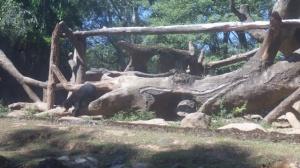 cisarua059